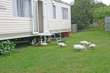 holiday homes in Northumberland